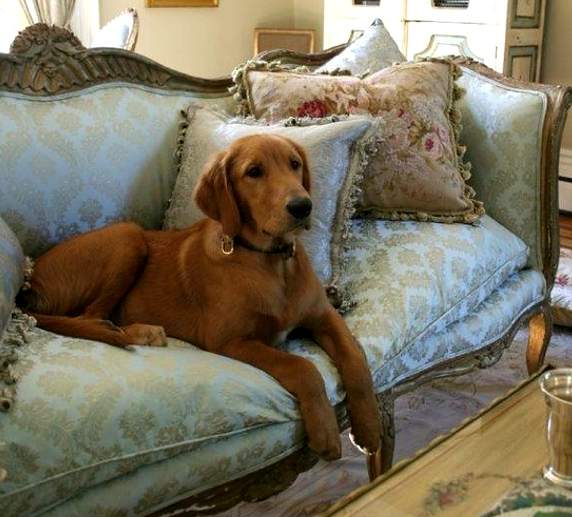 Pet owners sofa cleaning tips.
