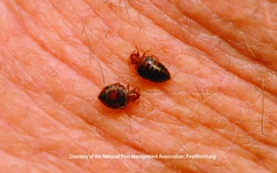 Guide to Bed Bug Prevention and Removal from Property